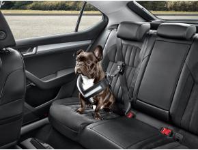 Ceinture de sécurité pour chien - L