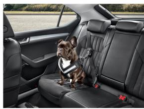 Ceinture de sécurité pour chien - S
