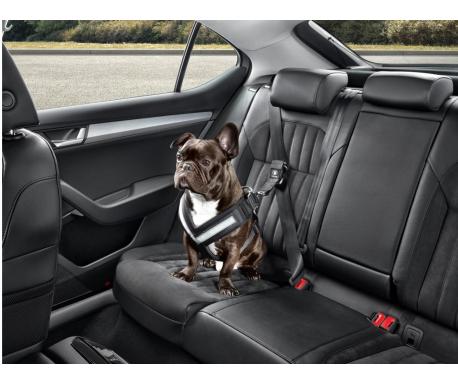 Ceinture de sécurité pour chien - XL